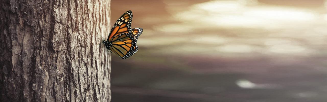farfalla natura
